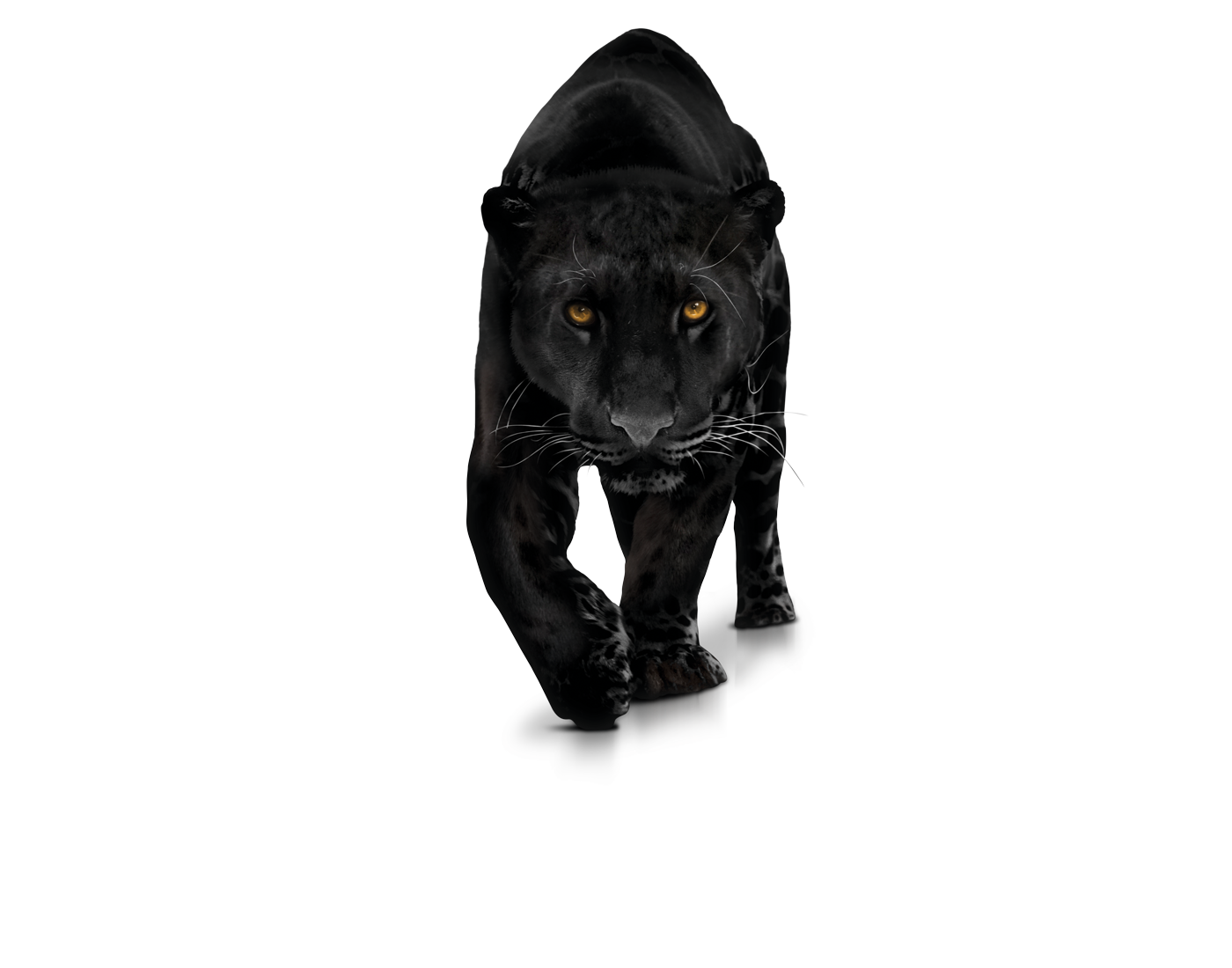 Png free images only. Panther transparent vector free download
