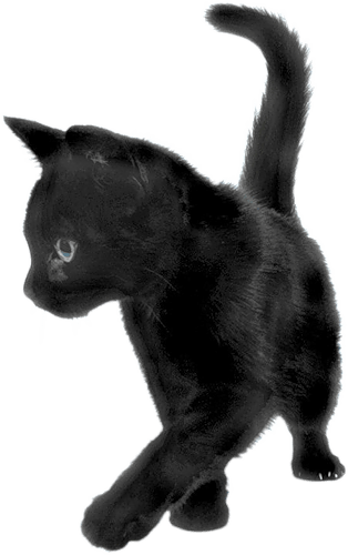 Black kitten png. Cat sideview transparent stickpng