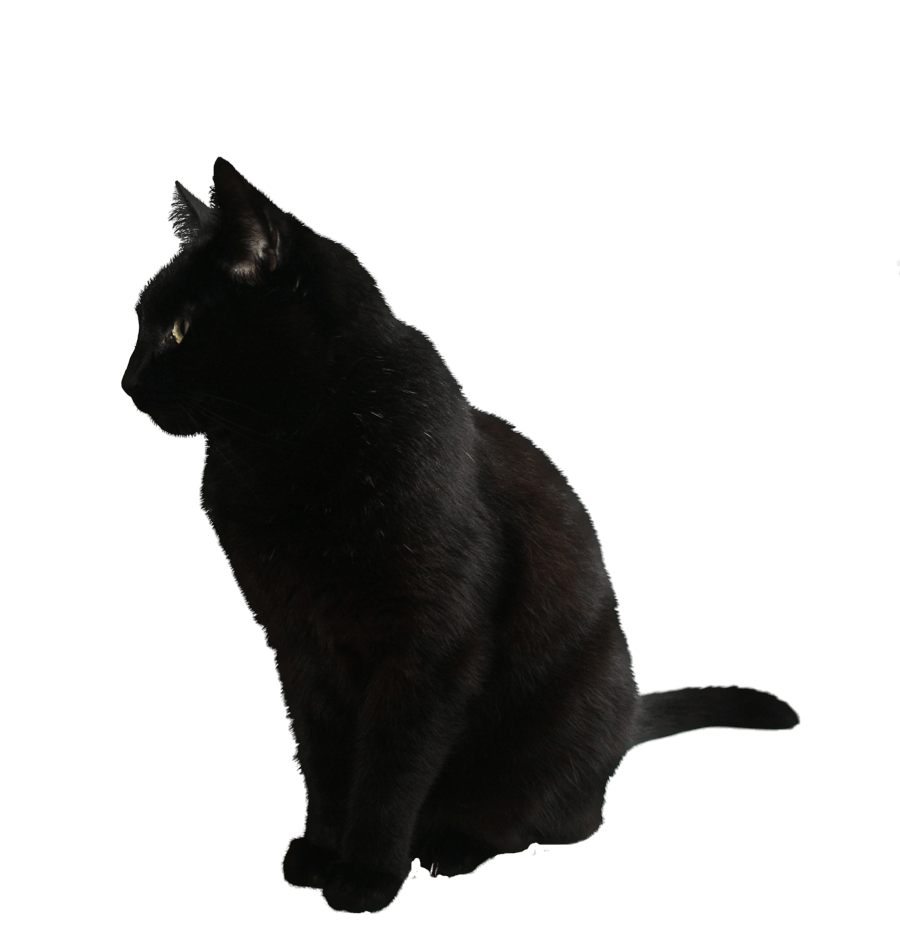 Black kitten png. Cat image download picture