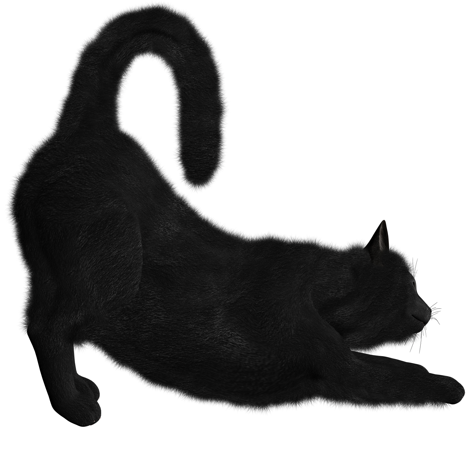 Black kitten png. Cats free images download
