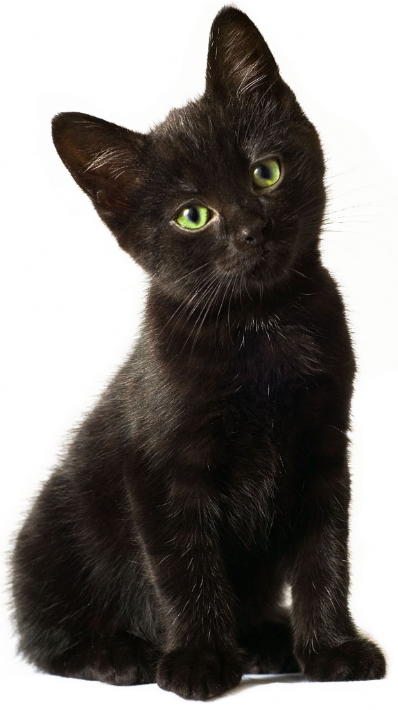 Black kitten png. Donate auction items for