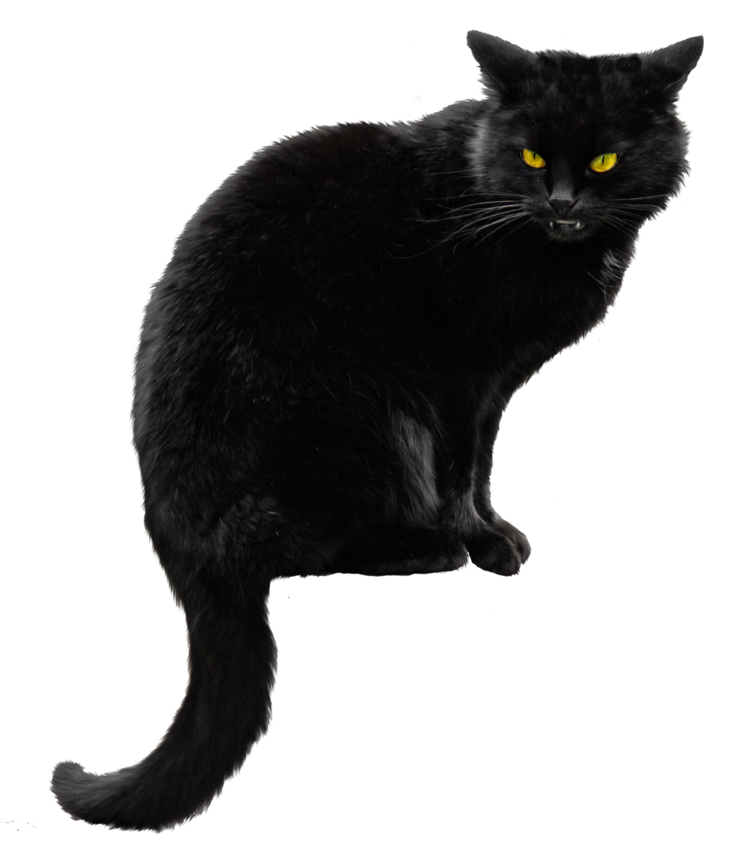 Black kitten png. Cat hd transparent