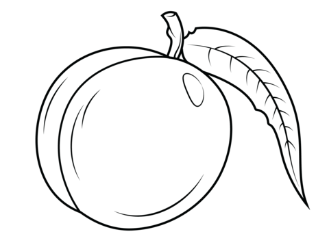 White nectarine. With leaf coloring page
