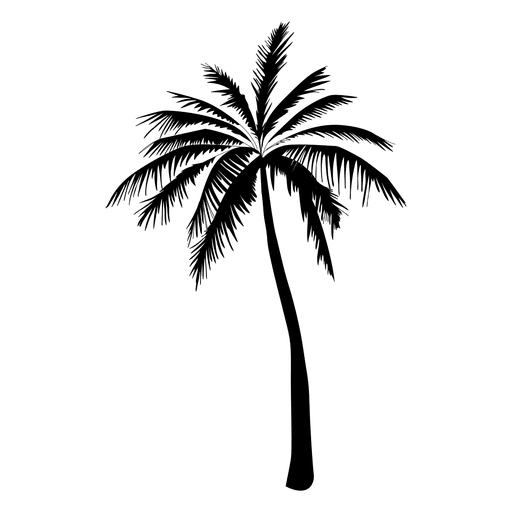 Black palm tree png. Silhouette in transparent svg