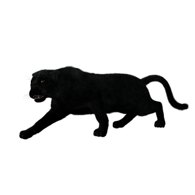 Black panther head png. Full body transparent stickpng