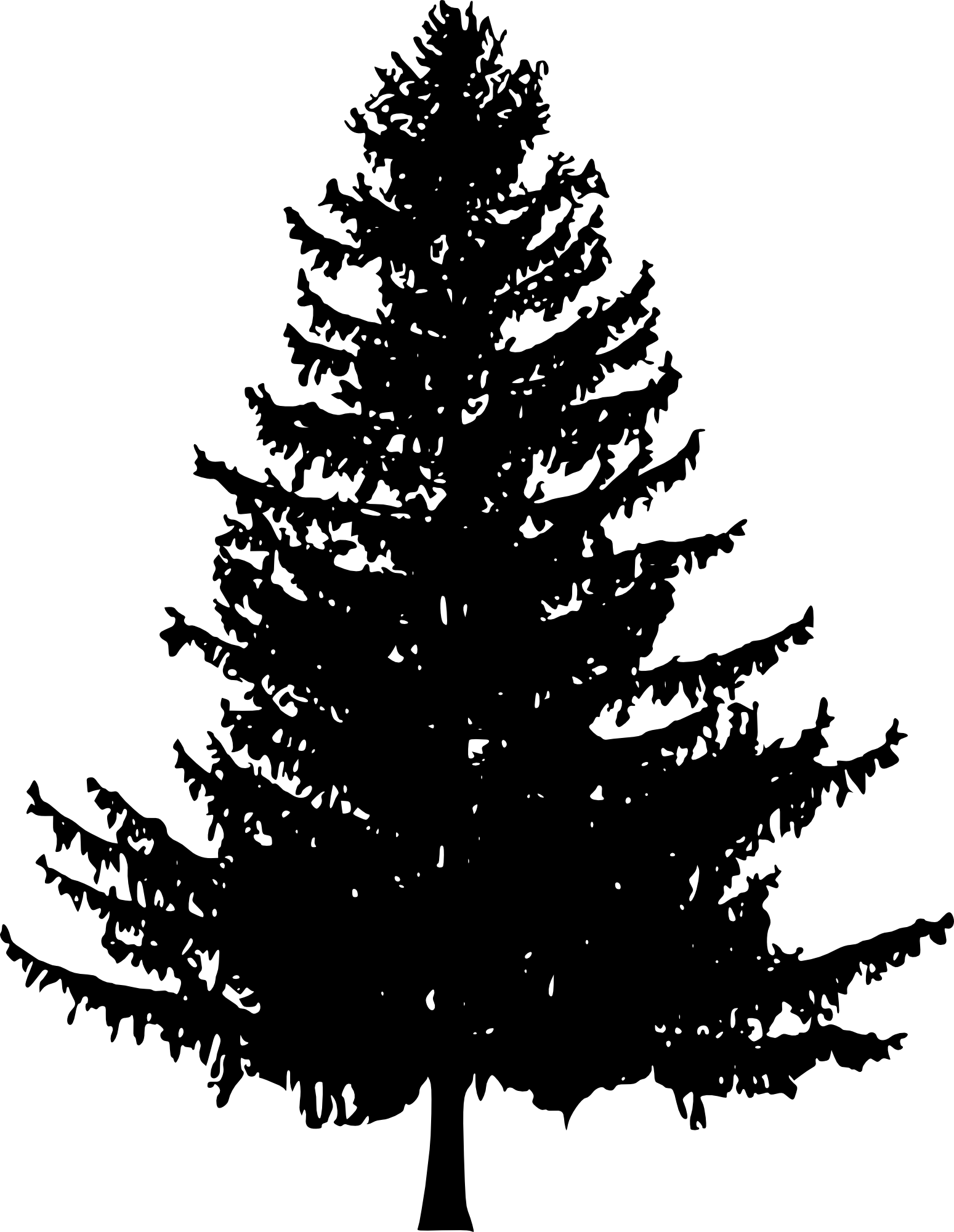 Black pine png. Tree silhouette transparent