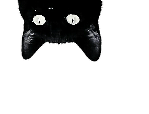 cat png tumblr