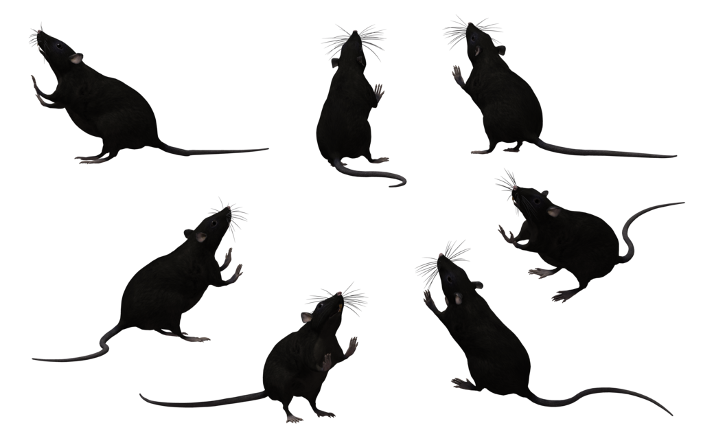 Rat silhouette png. Black set by free