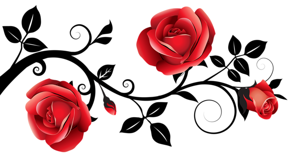 Black rose png. Red and decorative roses