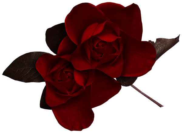 Dark flower png. Red rose clipart gallery