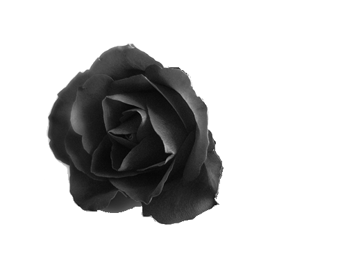 Black roses png. By hisgravemistake on deviantart