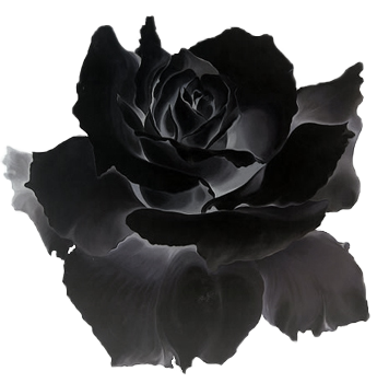 Black roses png. Image rose clipart animal