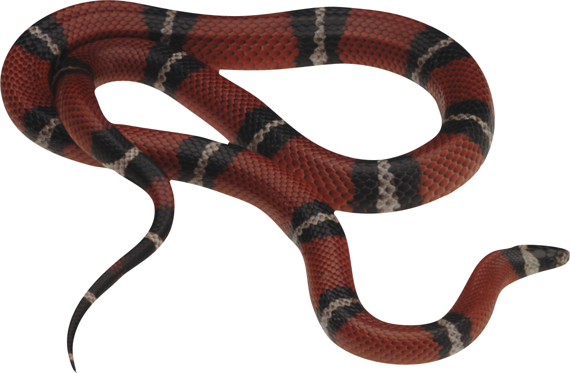 Gucci snake png. Image free download picture