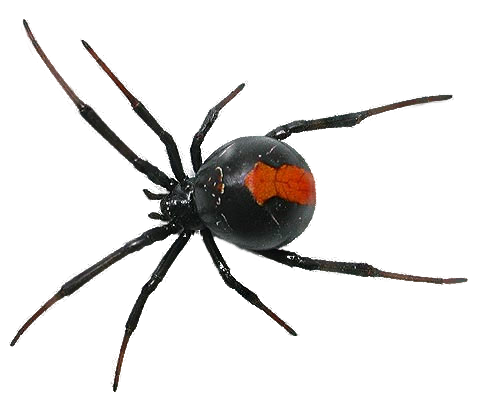 By camelfobia on deviantart. Spider png svg royalty free library