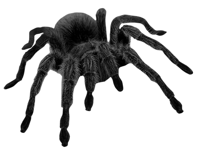 Black spider png. Haunted picture gallery yopriceville