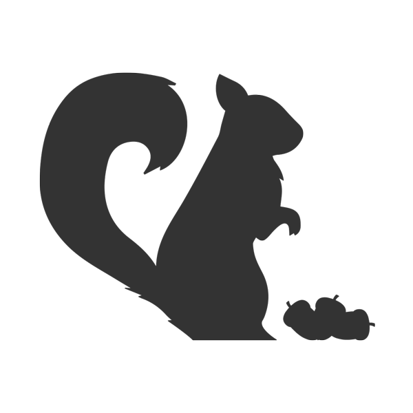Black squirrel png. What do squirrels eat