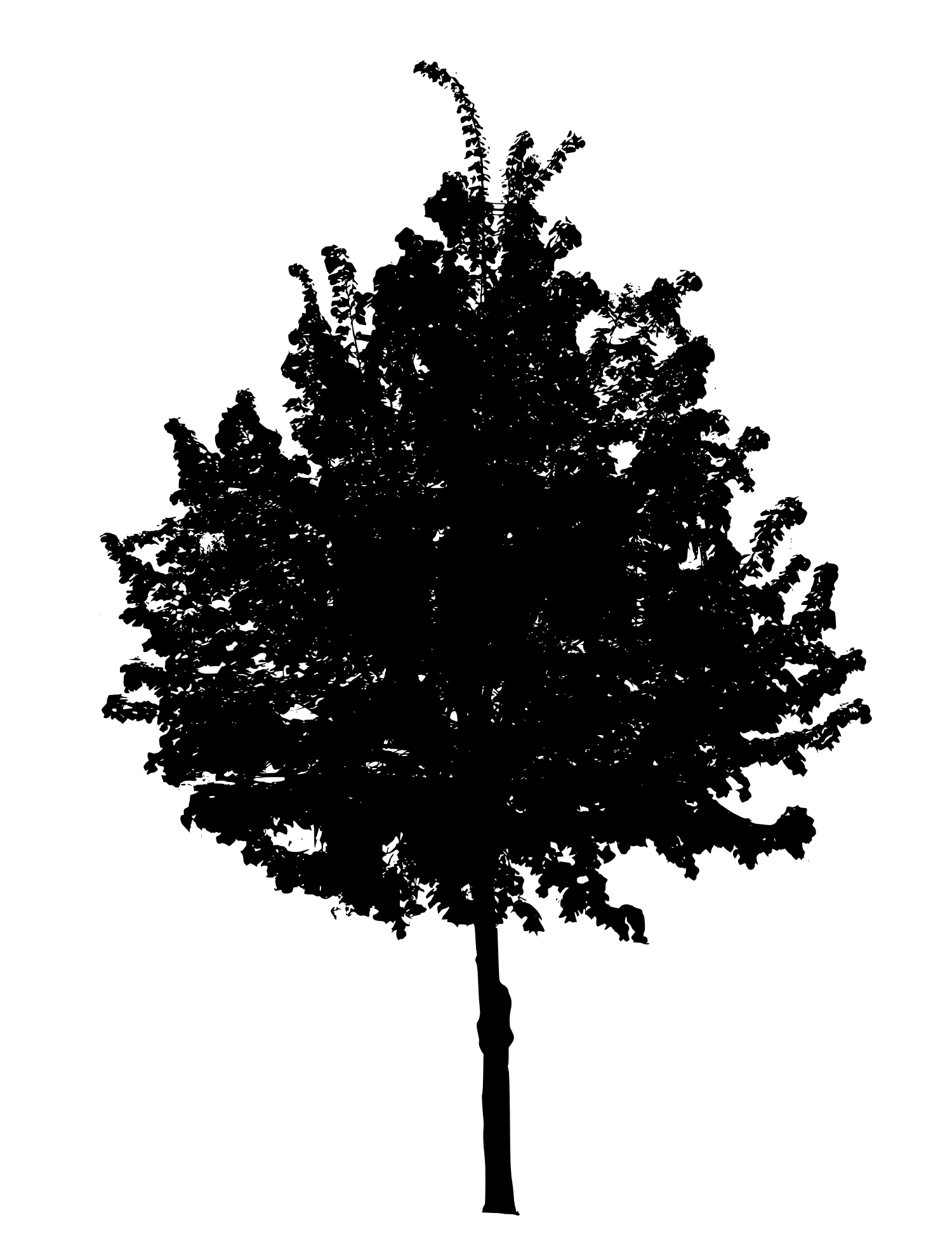 Black tree png. Image transparent onlygfx