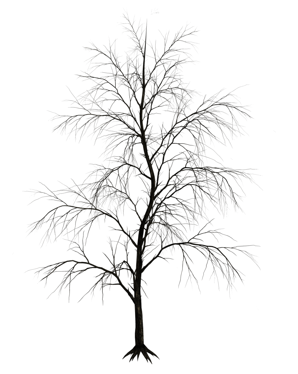 Winter tree silhouette png. Dark trees stock by
