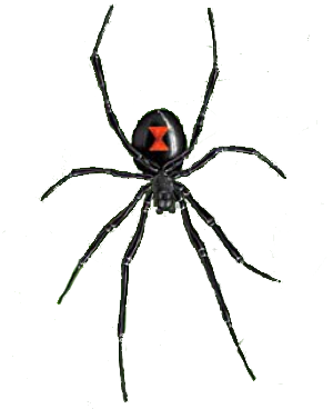 Spiders Drawing Black Widow Spider Picture 1480347 Spiders