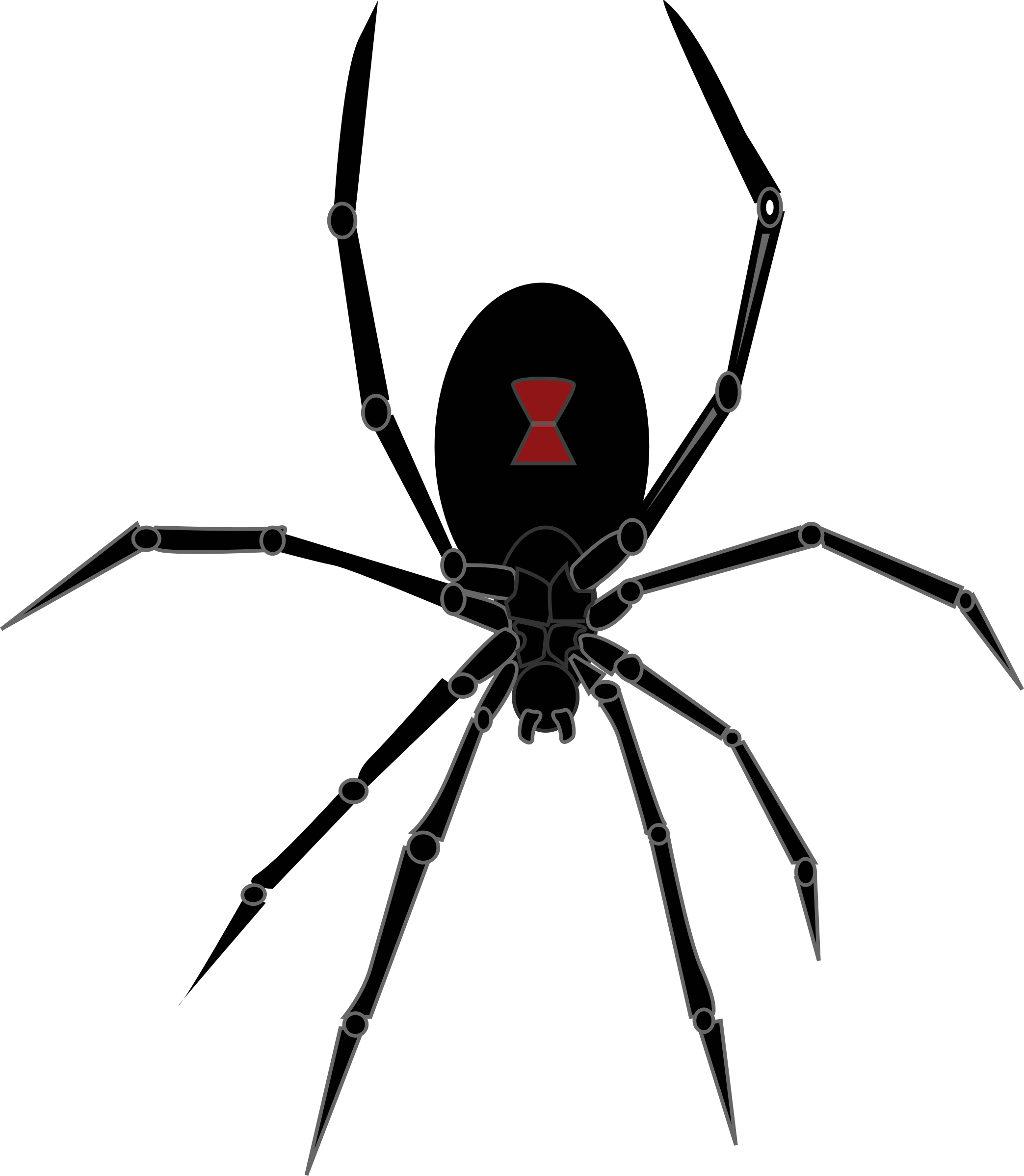 Black widow spider png. Icons free and downloads