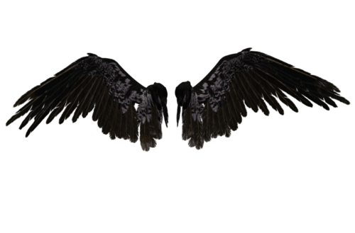 Black wing png. Wings uploaded by talism