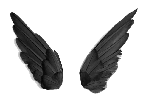 Black wing png. Wings images free download