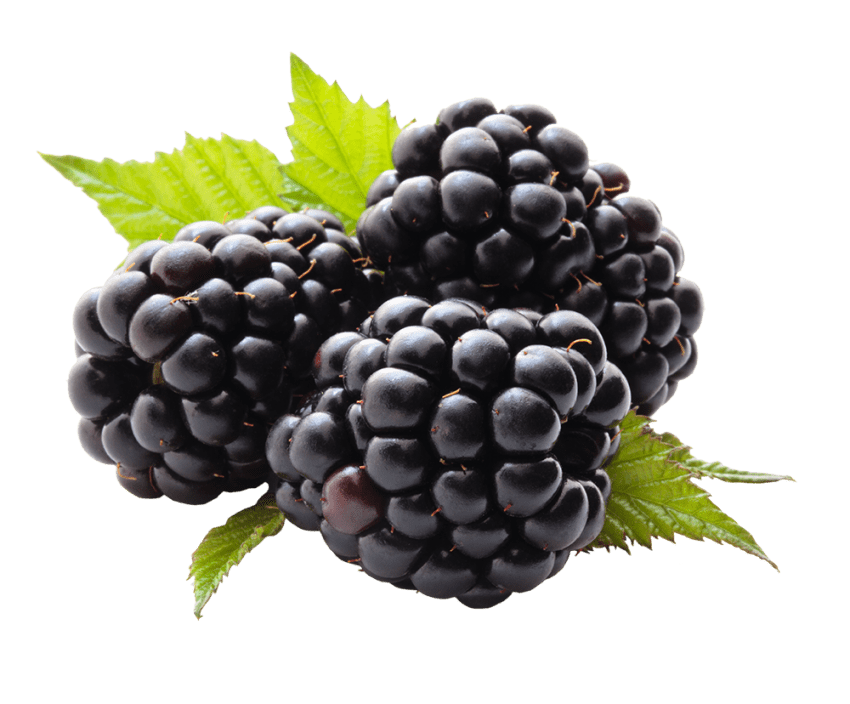 Blackberry fruit png. Free images toppng transparent