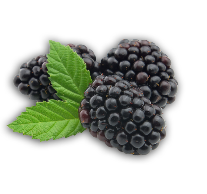 Blackberry fruit png. Images free download