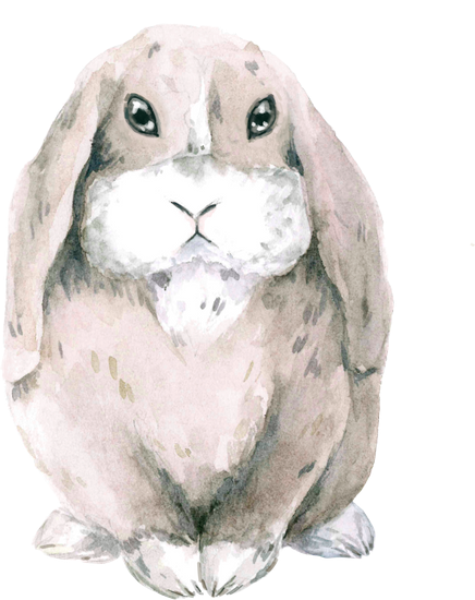 Hares drawing hand drawn. Free premium stock photos
