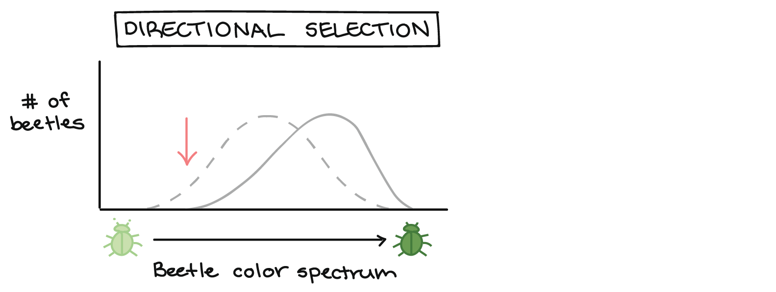 drawing histogram biology