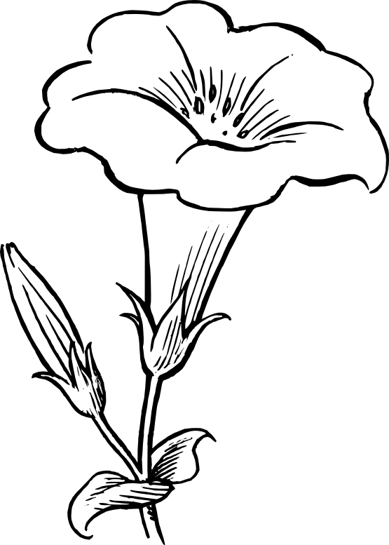 Weeds drawing peace. Gamopetalous flower black white