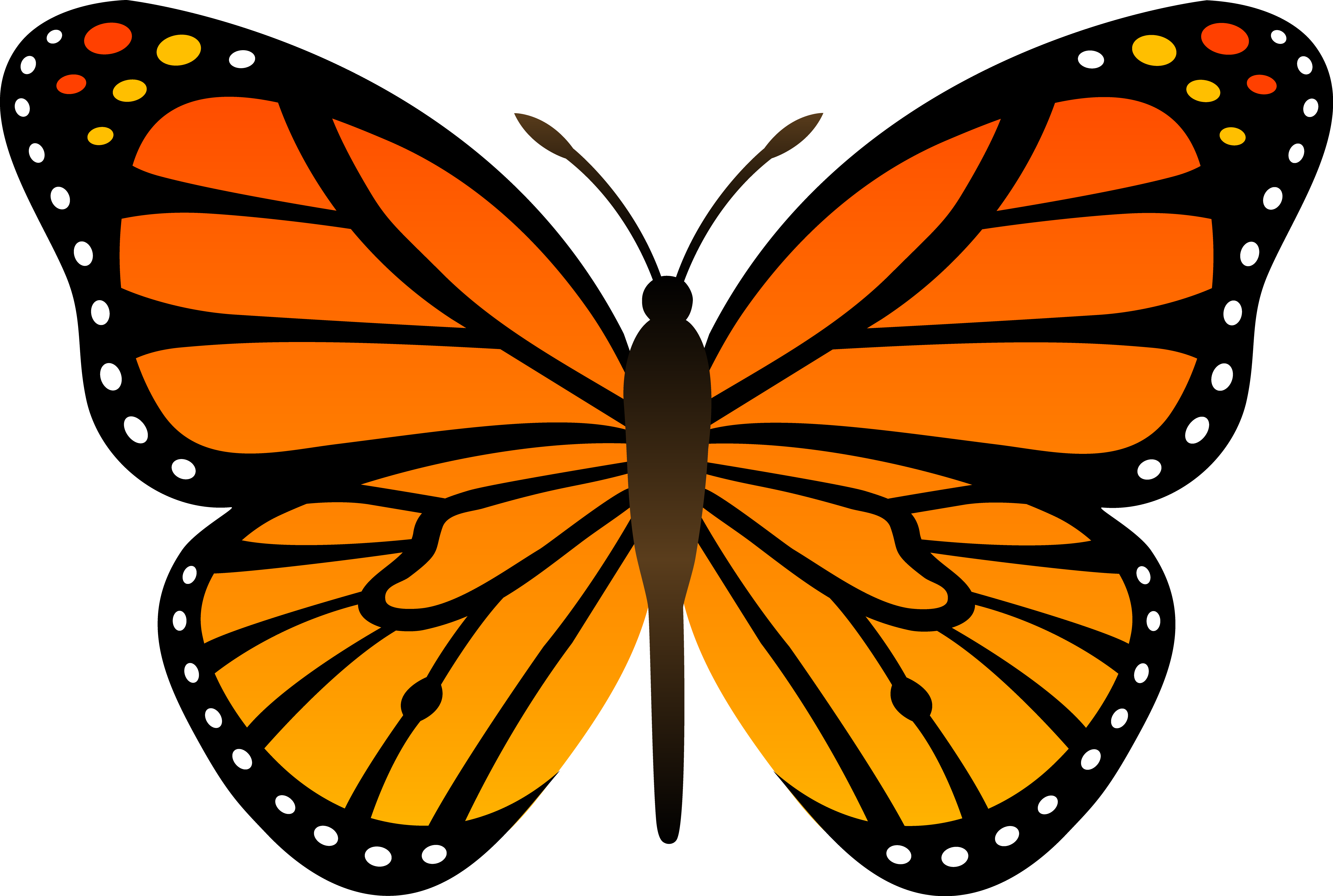 Collection of free galleries. Butterfly clip art banner black and white