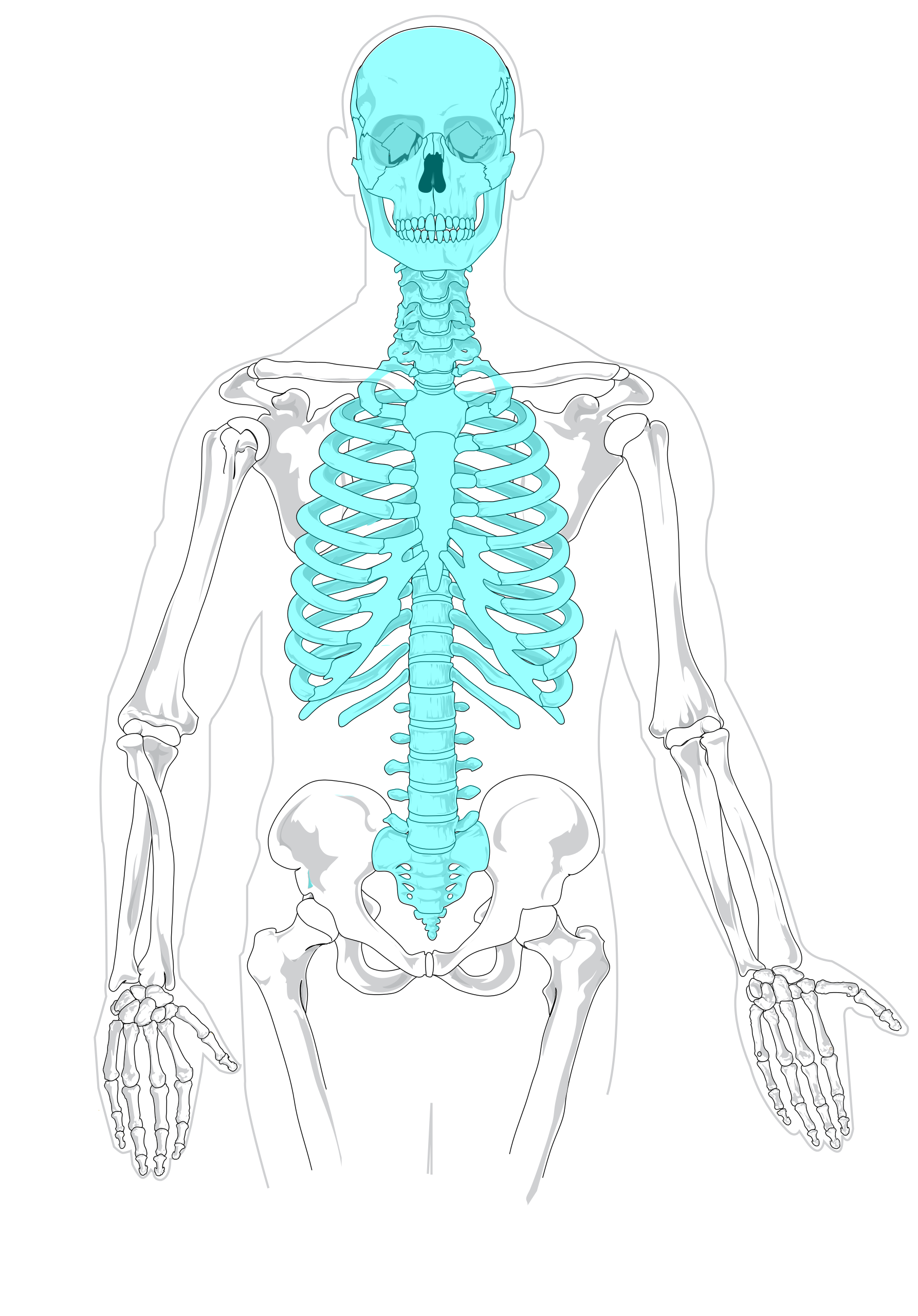Blank drawing skeleton. File axial diagram svg