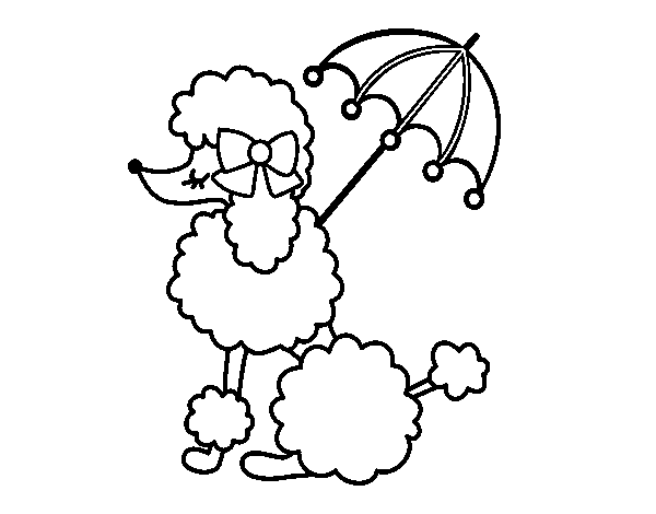 Drawing door colouring page. Coloring poodle with sunshade