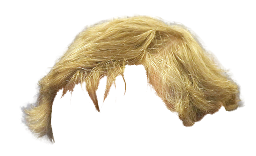 Blond hair png. Photoshop contest put bud