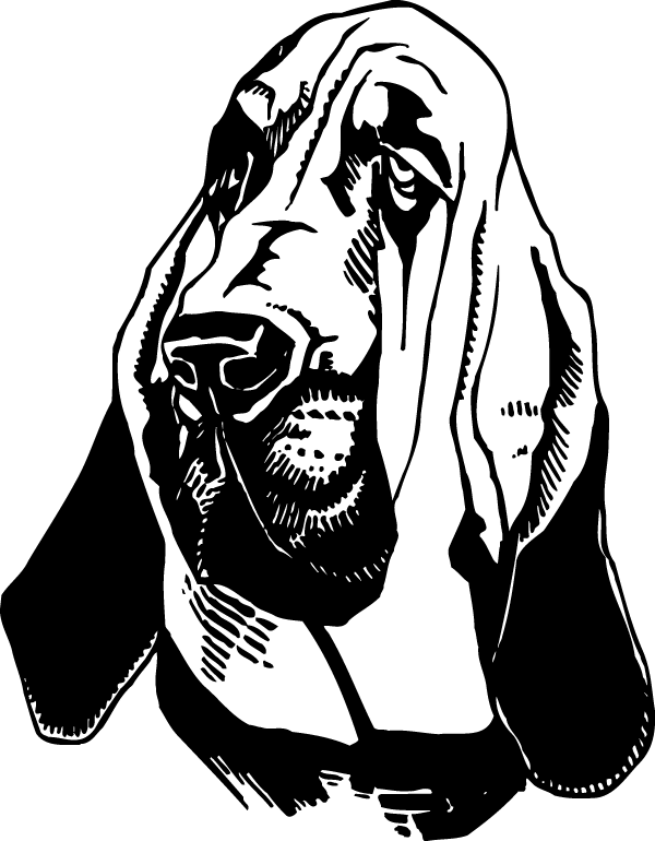 Bloodhound drawing. Decal
