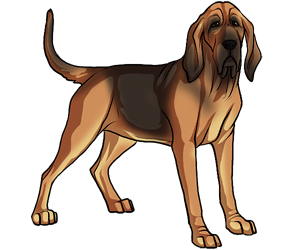 Bloodhound drawing coyote. Black star kennels free