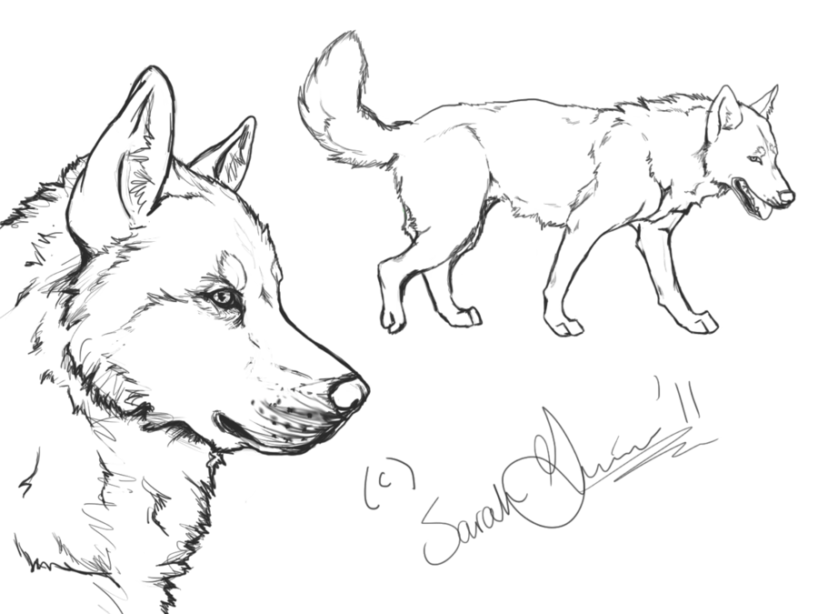 Bloodhound drawing simple. Siberian husky lineart by
