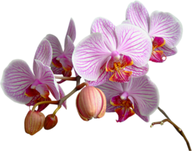 Flower gif png. Index of users tbalze