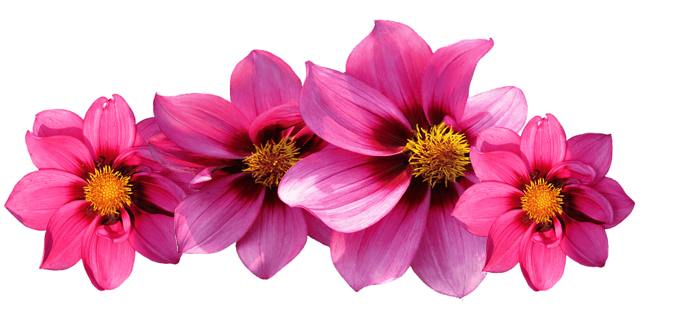Blooming flower png. Types of flowers names