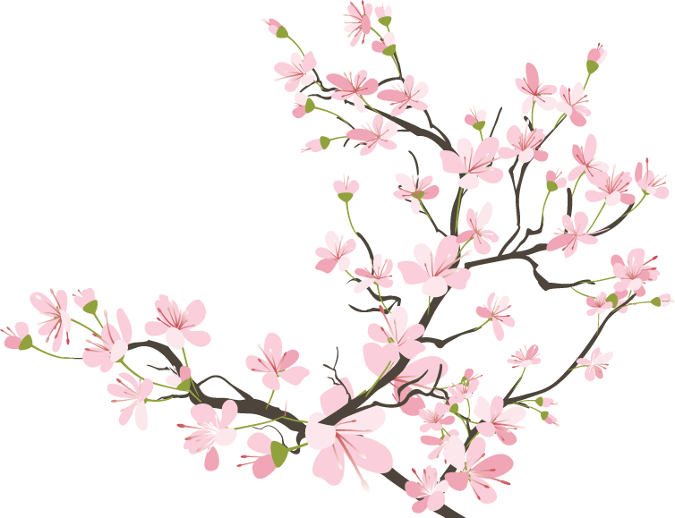 Petal drawing sakura. Flowers cherryblossom kawaii tumblr