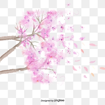 Cherry blossom png. Kawaii images vectors and