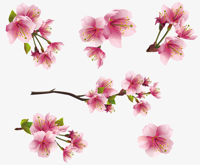 Collection pink flowers png. Blossom clipart peach blossom picture free stock