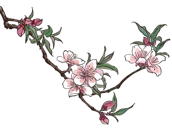 Drawing at getdrawings com. Blossom clipart peach blossom graphic free stock