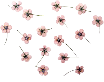 Download cherry blossom clipart. Flores tumblr png vector transparent library