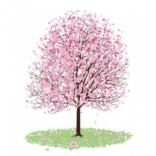 blossom clipart tumblr transparent