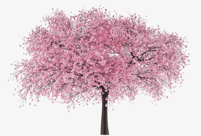 Blossom clipart weeping cherry tree. Trees blossoms pink flowers