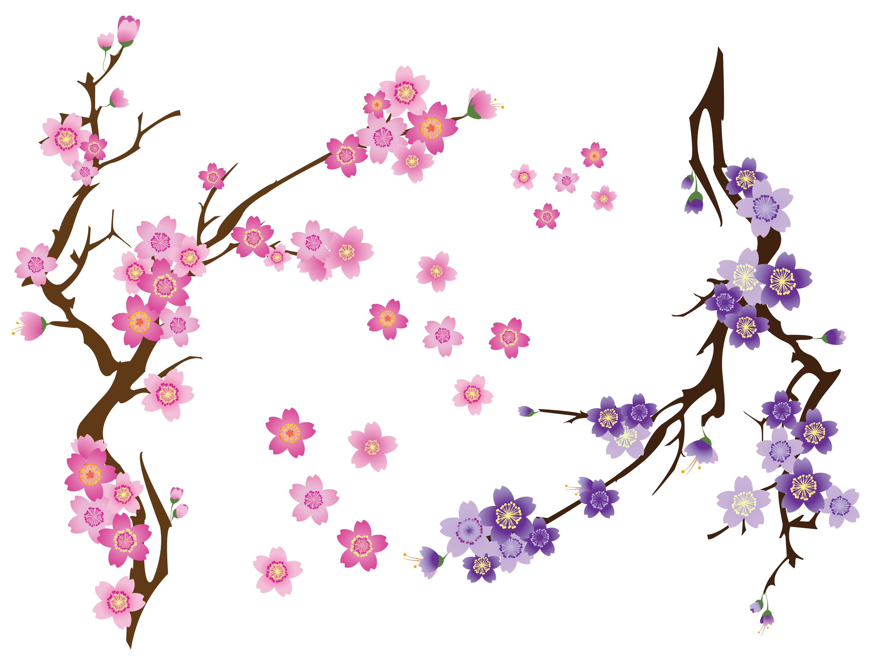 cherry blossom drawing - HD 3300×2550