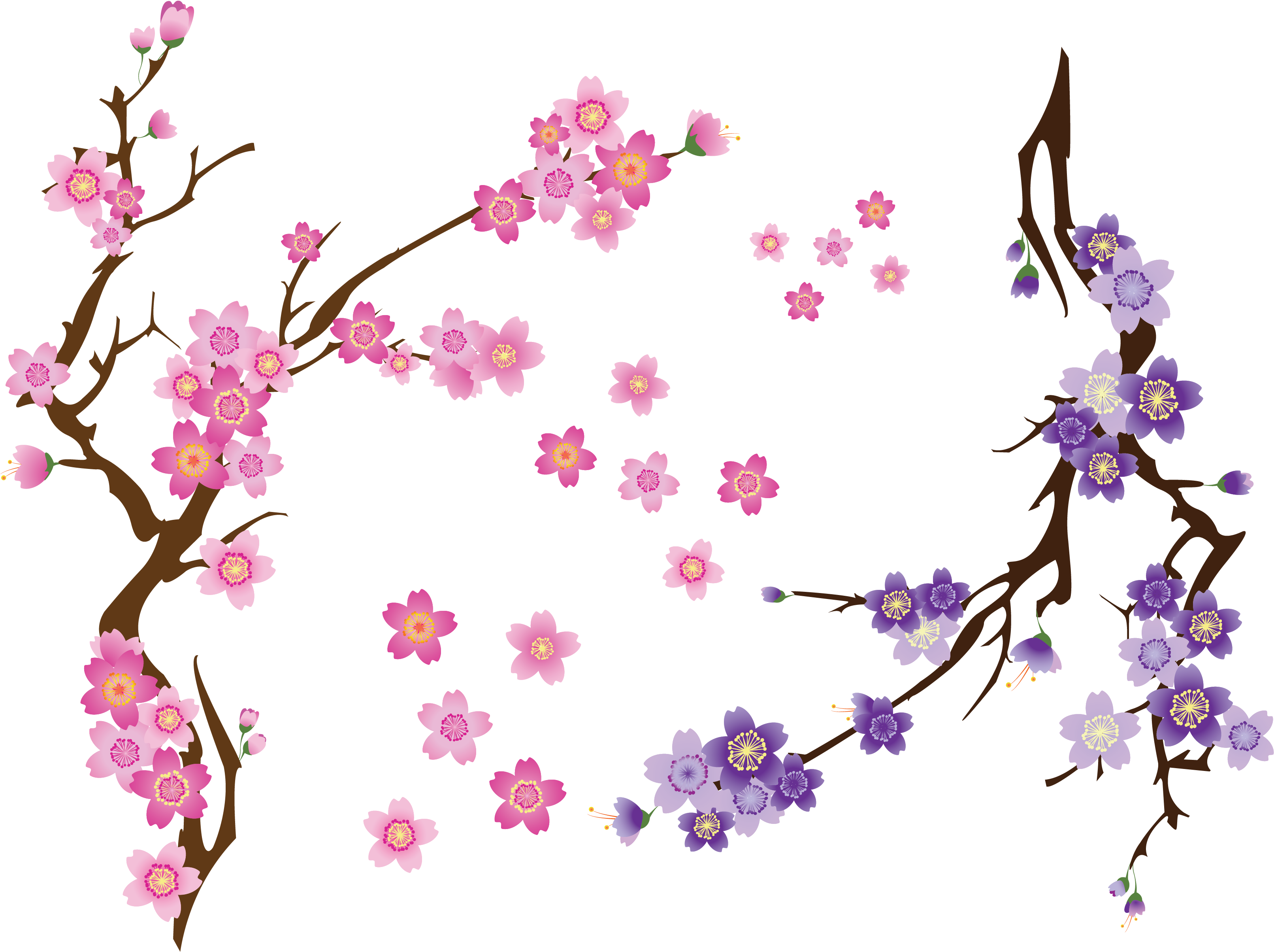Download cherry clip art. Blossom drawing clip transparent stock