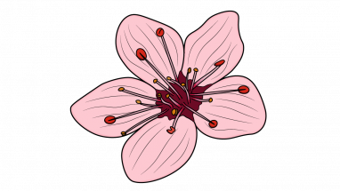 Blossom drawing. Collection of high